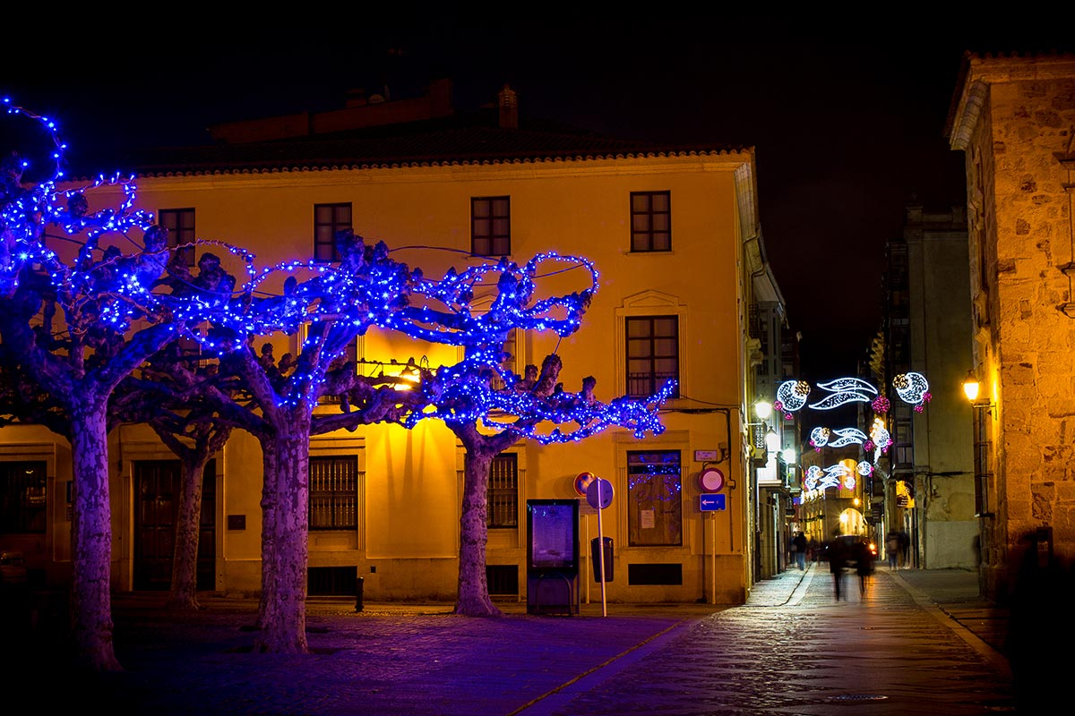 Árboles naturales iluminados con Guirnalda LED Azul